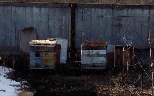 Пчёлы макро