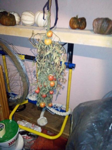 кладовка с помидорами