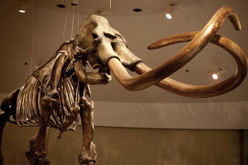 Останки мамонта
