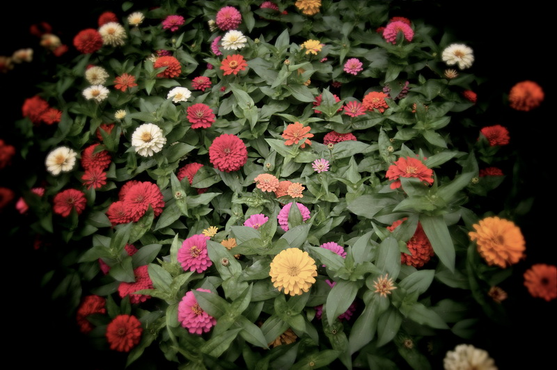 Треть всех видов цветковых растений находится под угрозой исчезновения