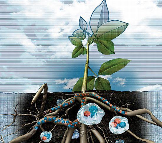 Гидрогели в сельском хозяйстве