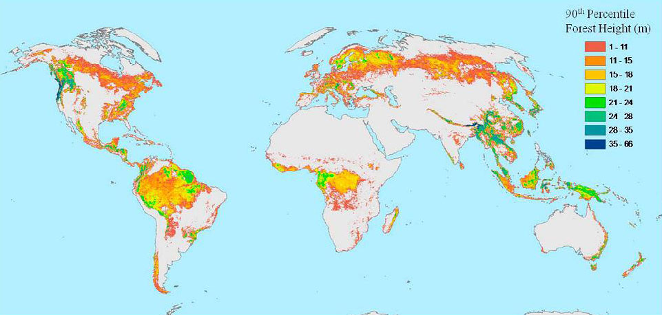 Global forest height map
