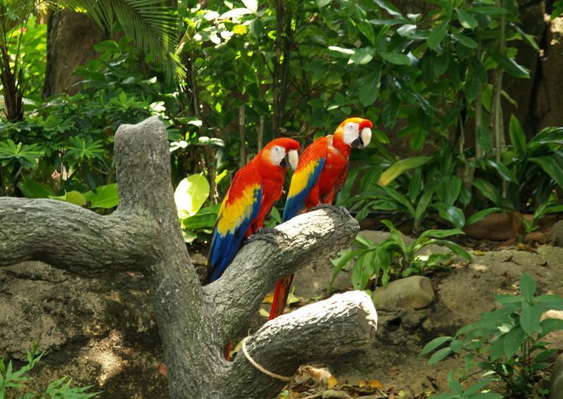 Уменьшение биоразнообразия тропических лесов
