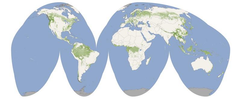 NASA измерило высоту древесной растительности планеты из космоса