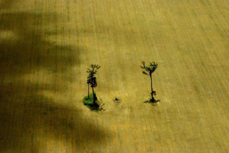 Вырубка тропических лесов в Бразилии