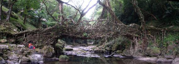 Мост из пальмы в Индии