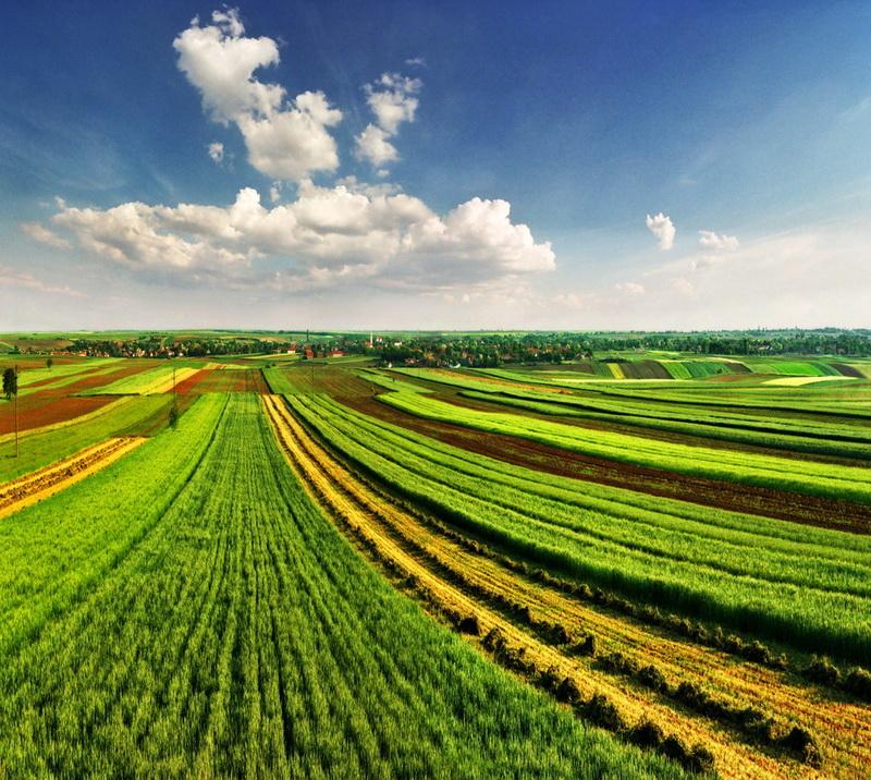 Каждый год площадь сельскохозяйственных земель уменьшается на одну Италию