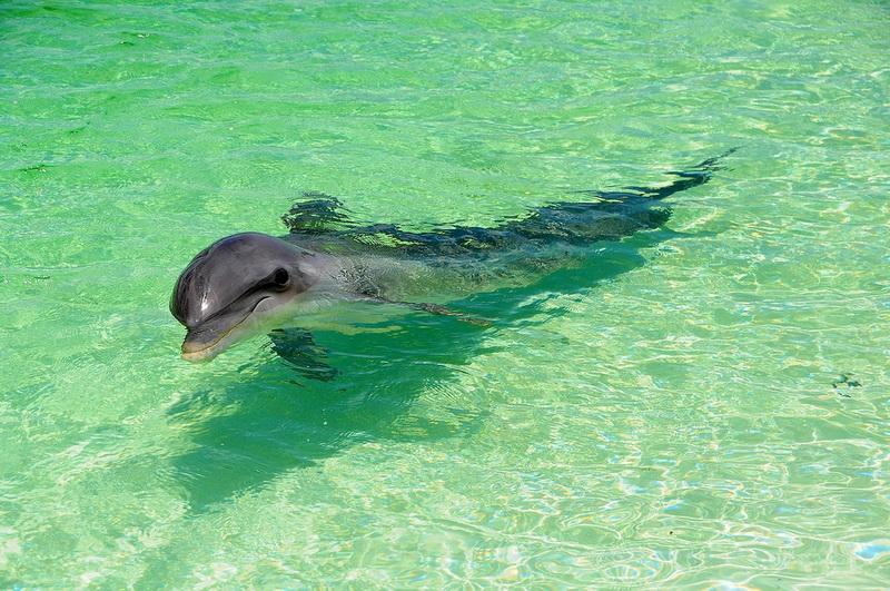 Почему дельфины выбрасываются на берег?