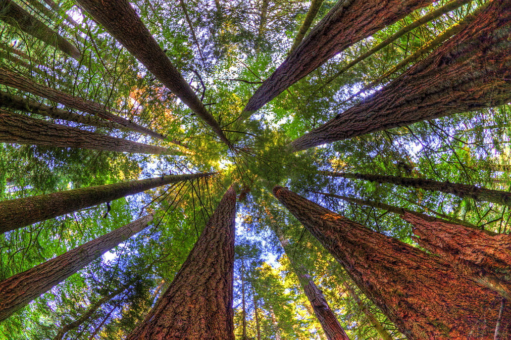 растительность и глобальное потепление