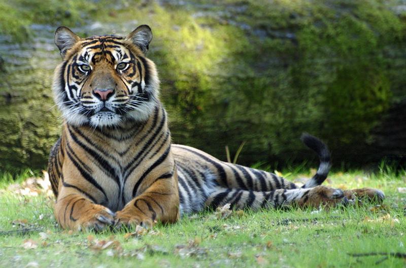 Уходящий год тигра