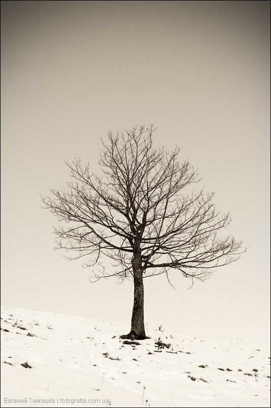 Одинокий житель Карпат