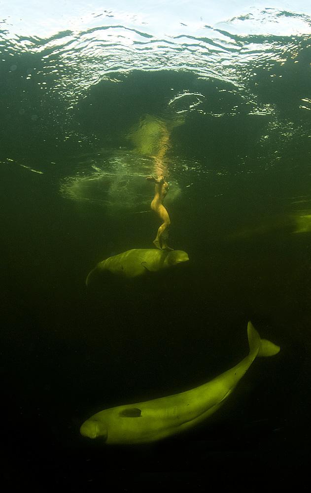 Наталья Авсеенко плавает в Белом море с белухами