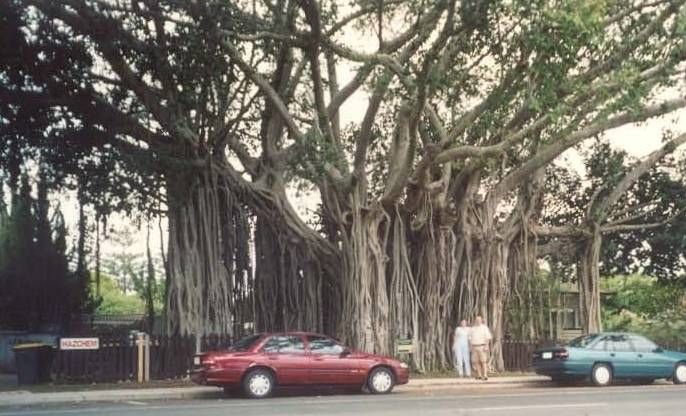 """""""Дерево - лес"""""""