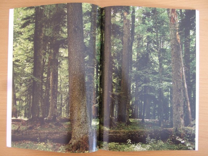 Лес Пихты Кавказской