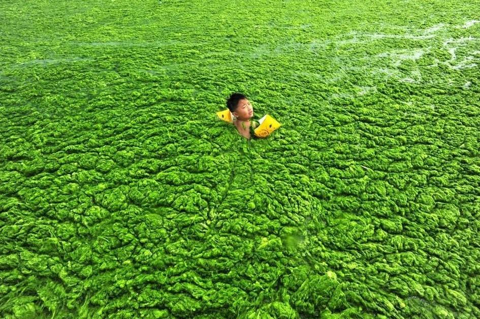водоросли в Китае