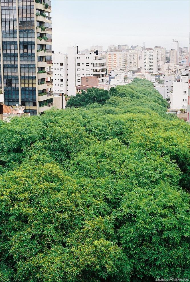 Улица Гонсалу ди Ковалью в Бразилии