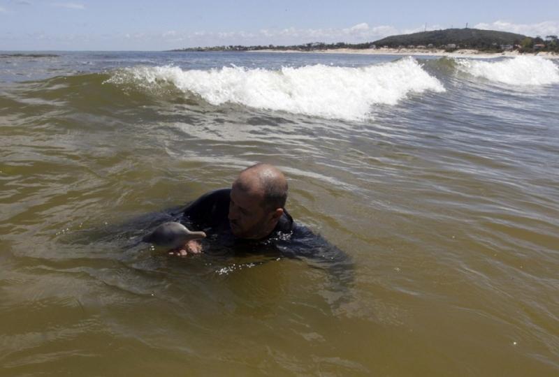 Дельфин лаплатский