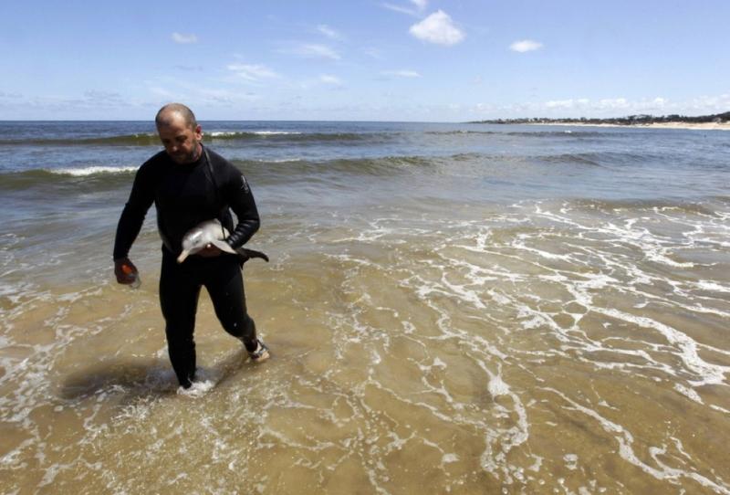 Кормление детёныша дельфина