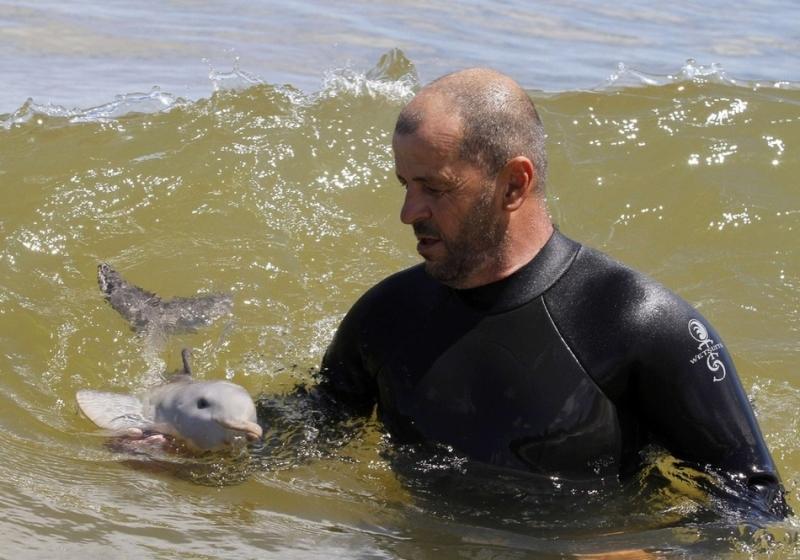 Кормление детёныша дельфина молоком