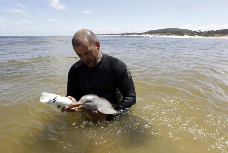 Кормление дельфина молоком