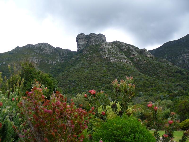 Протеи на фоне скалистых гор