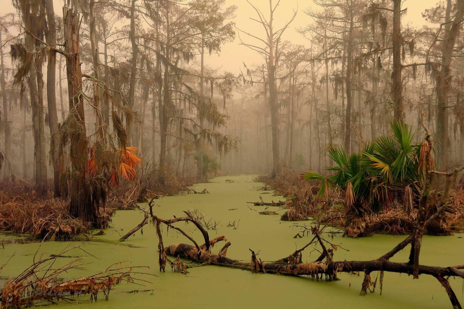 Луизианские болота Манчак