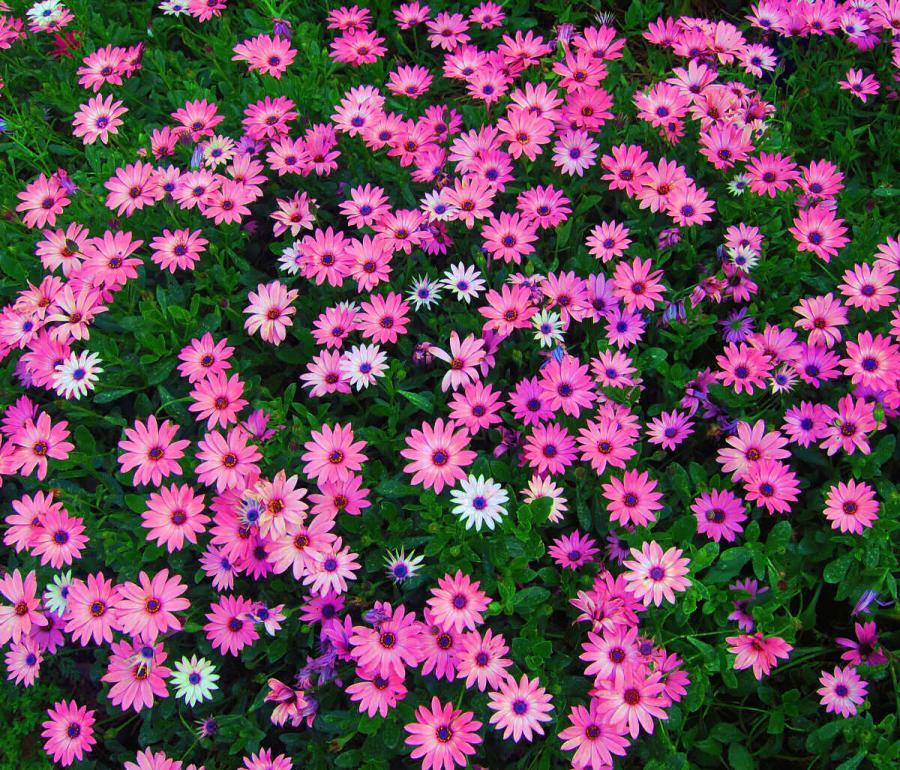Ковёр весенних цветов
