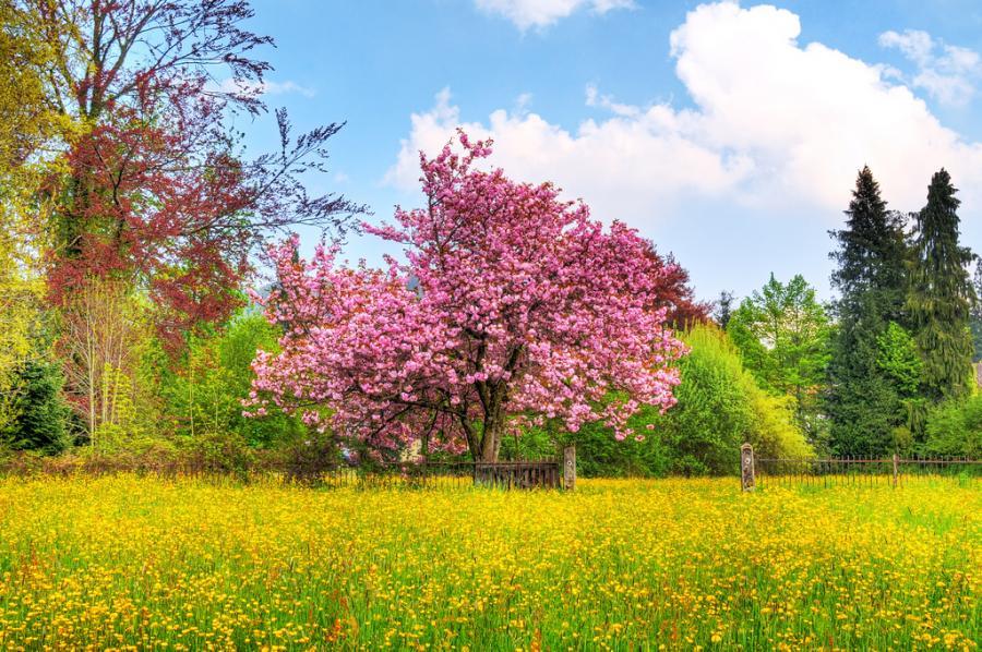 Пёстрая палитра цветов