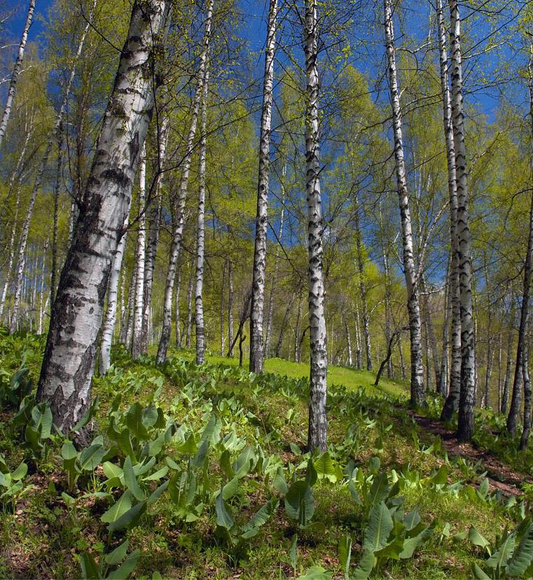 Просыпающийся весенний лес