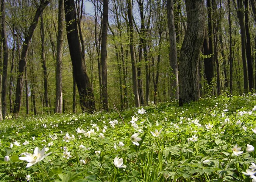Весенний лес и первые цветы