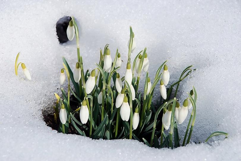 http://ic.pics.livejournal.com/www_priroda_su/25599529/39456/39456_original.jpg