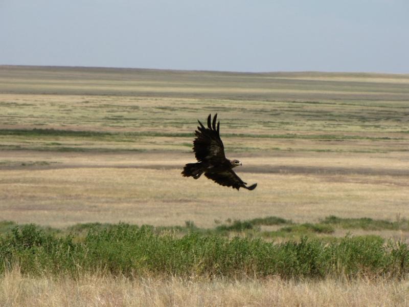 Россия и Казахстан договорились о совместных действиях по сохранению степных экосистем