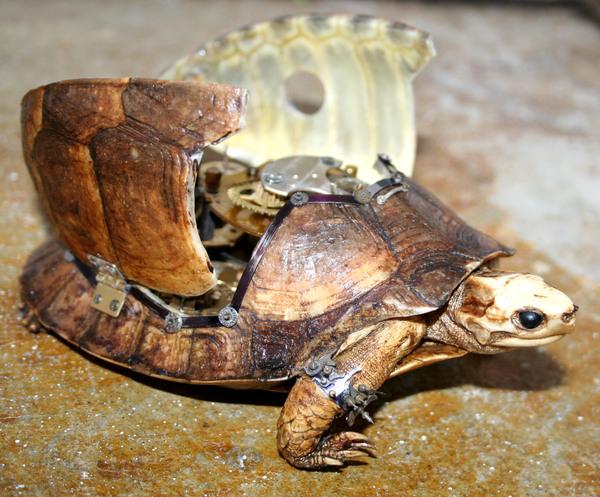 Механизированная черепаха