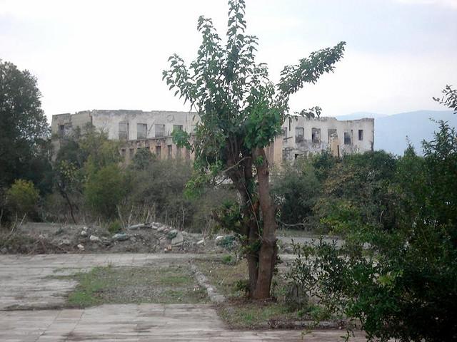 Одинокорастущее дерево на фоне руин