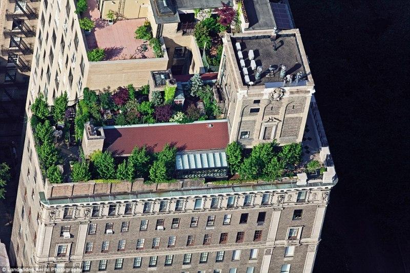 Зелёные крыши Нью-Йорка