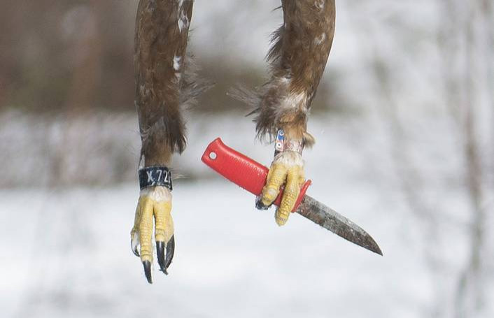 Птица с ножом