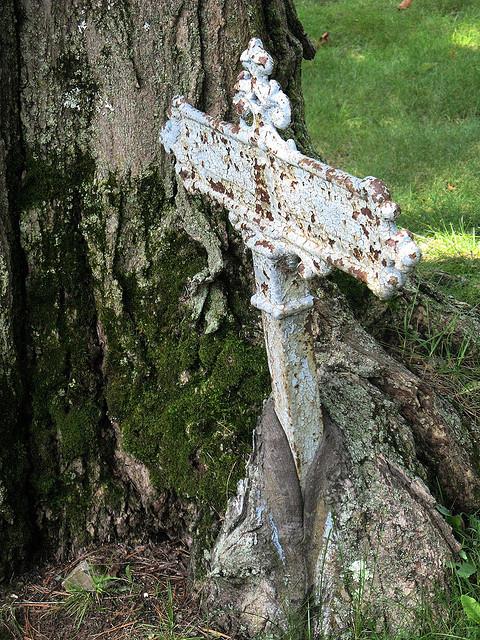 съеденные деревьями