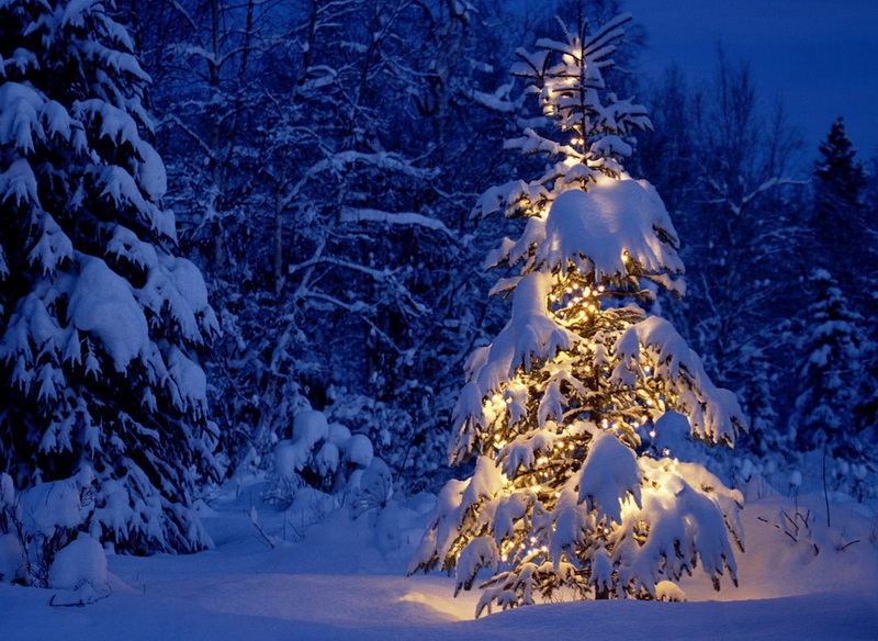 Флуоресцирующие новогодние ёлки