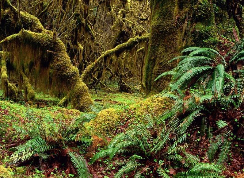 деревья покрытые мхом