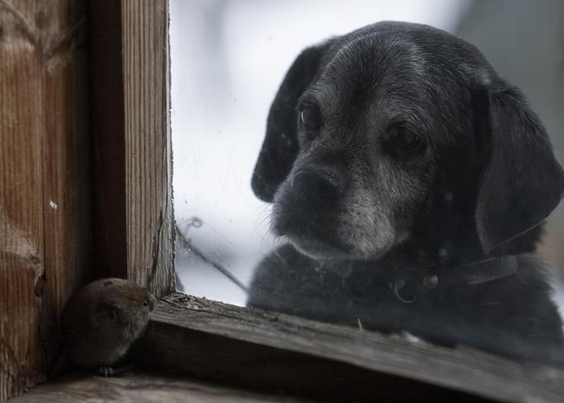 животные в заброшенном доме