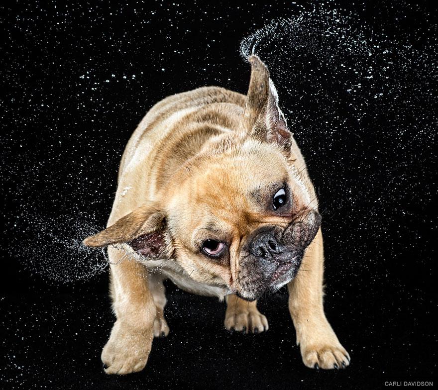 собачья гигиена