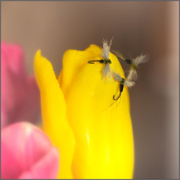 С-праздником-весны