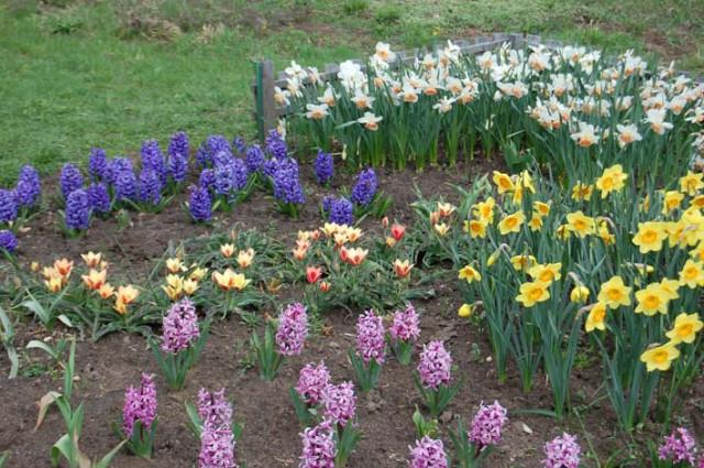 цветы в ботаническом саду