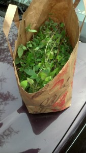 2014 oregano for the homeless shelter