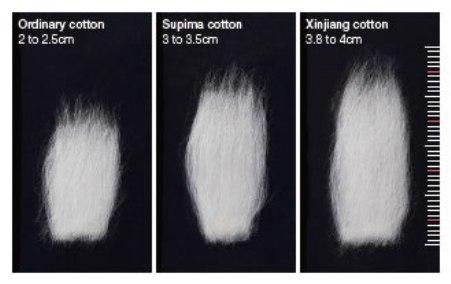 cotton-staple