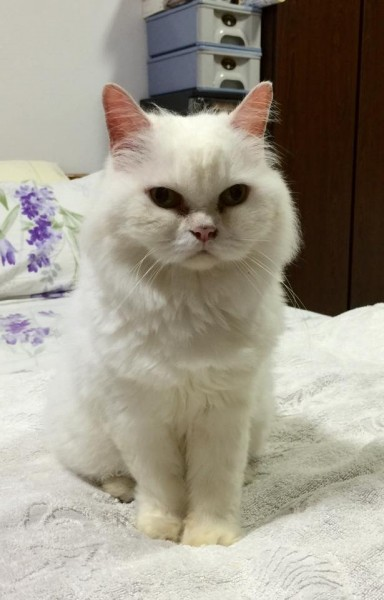 Snowy at age 14