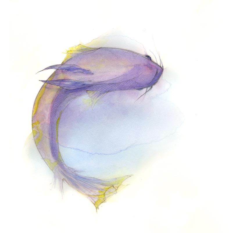 poisson04
