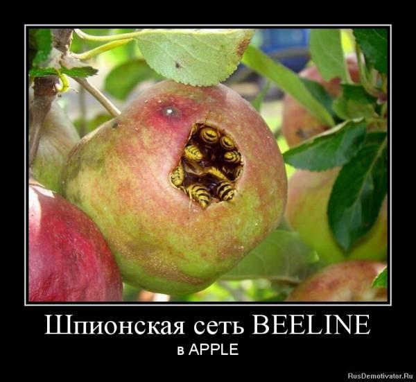 1346225228-shpionskaya-set-beeline