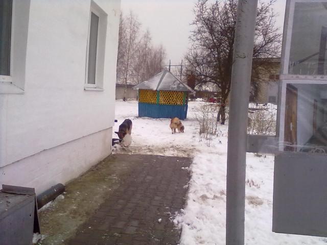 зимние котэ