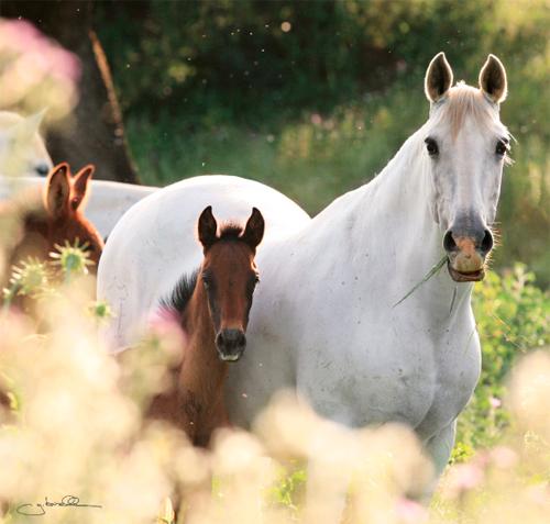 лошади видео жеребенок белой лошади ребенок